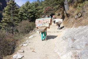 Big loads being carried to Namche Bazaar for market day.