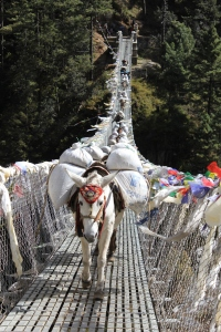 Mules carrying loads over the suspension bridge south of Namche Bazaar.