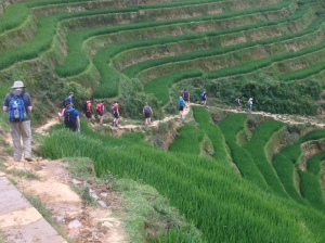 Team members walking through the fields near Sa Pa, North Vietnam