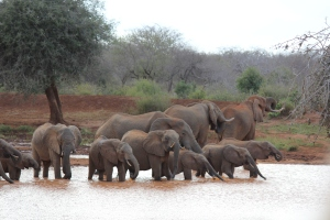 A herd of elephant visiting a waterhole near our camp.