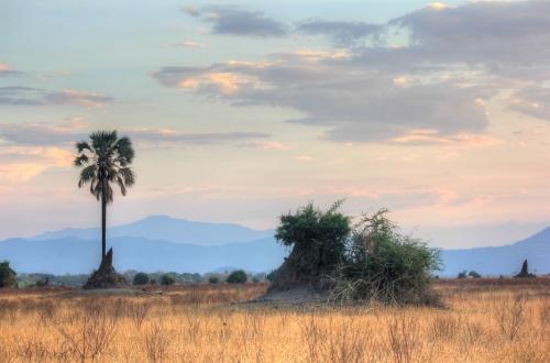 Liwonde national park, near Mvuu Lodge.